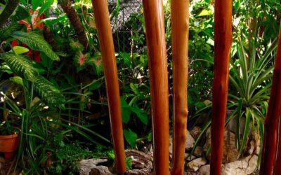 Pourquoi et comment vernir son didgeridoo ?